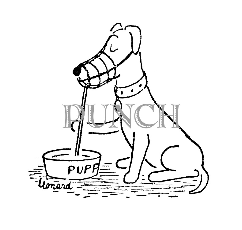 (A muzzled dog drinks its water through a straw)