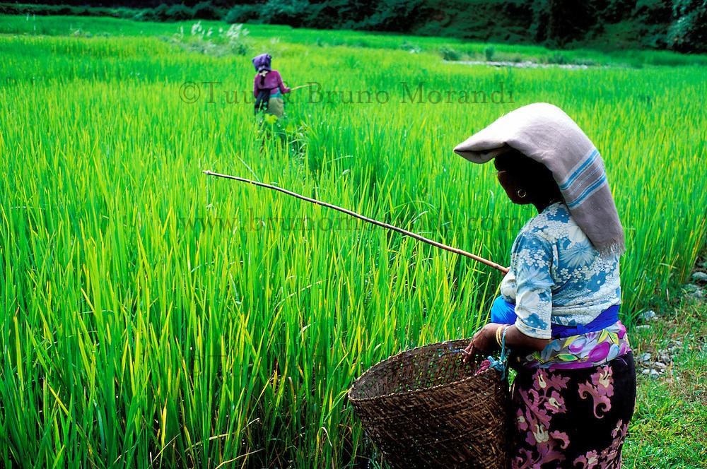 Nepal - region des Annapurnas - Pecheurs dans les rizières