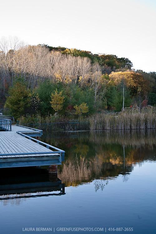 Wetland (swamp, bog, swale, marsh).