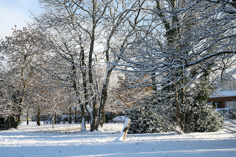 Snow covered trees in Killiney Dublin Ireland during the cold snap in November 2010