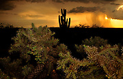 A sunset during a monsoon shower is seen from Sahuarita in the foothills of the Santa Rita Mountains, a Sky Island in the Coronado National Forest, Arizona, USA.