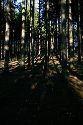 CZECH REPUBLIC VYSOCINA 16OCT11 - Forest near Trpin, Vysocina, Czech Republic.....jre/Photo by Jiri Rezac....© Jiri Rezac 2011