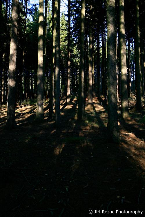 CZECH REPUBLIC VYSOCINA 16OCT11 - Forest near Trpin, Vysocina, Czech Republic.....jre/Photo by Jiri Rezac....© Jiri Rezac 2011