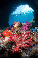 """Soft Corals and """"Windows"""".Shot in West Papua Province, Indonesia"""