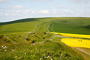 Wansdyke a Saxon defensive structure on All Cannings chalk downs near Tan Hill, Wiltshire, England