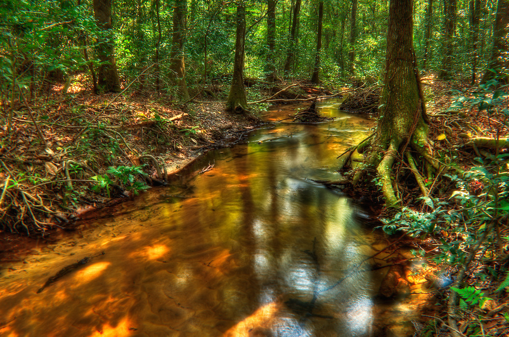 A nameless creek meanders through the Apalachicola National Forest.