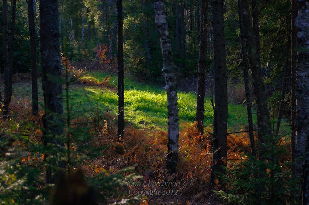Sunlight illuminating an opening in the woods
