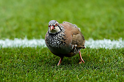 A bird holts play between Wycombe Wanderers and Bristol Rovers in Sky Bet League One - Mandatory by-line: Robbie Stephenson/JMP - 18/08/2018 - FOOTBALL - Adam's Park - High Wycombe, England - Wycombe Wanderers v Bristol Rovers - Sky Bet League One