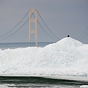 A Bald Eagle Perched On A Mound Of Blue Ice In Lake Huron In The Straits Of Mackinac With The Mackinac Bridge In The Background.