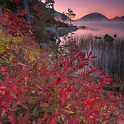 The early light gives a warm glow to the berry bushes around Eagle Lake in Acadia National Park, Maine