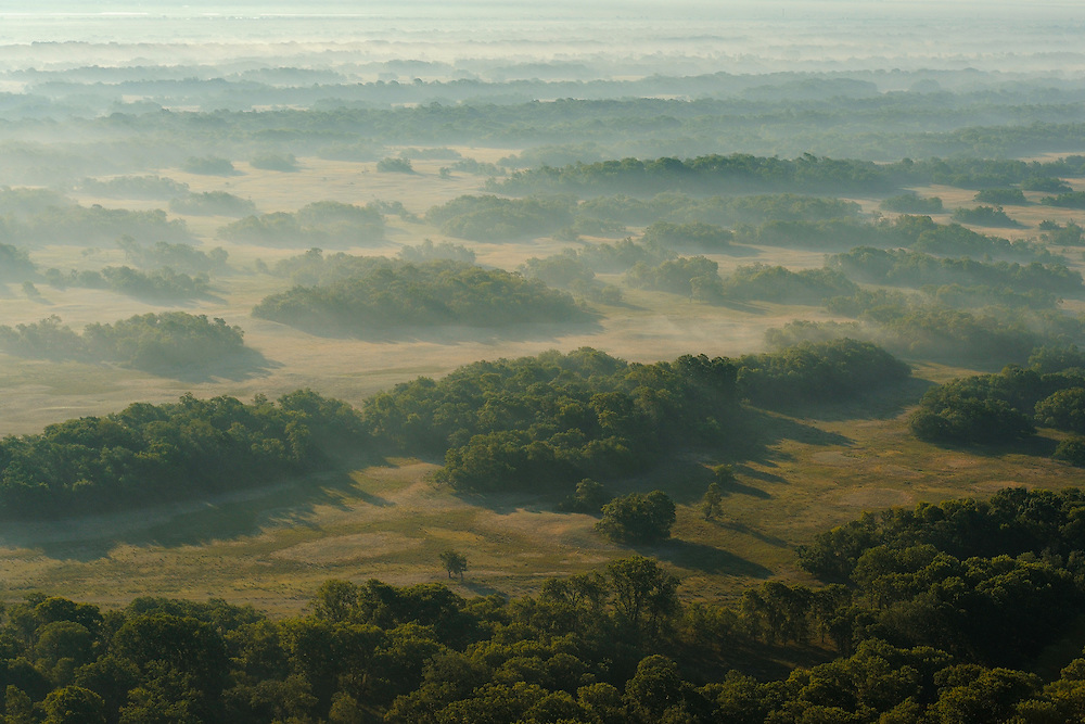 Aerials over the  Letea forest, Danube delta rewilding area, Romania