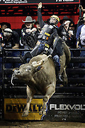 Jess Lockwood rides SweetPro's Long John during the Professional Bull Riders, Built Ford Tough Series at the Sprint Center, Saturday, Feb. 11, 2017, in Kansas City, Mo. (AP Photo/Colin E. Braley)