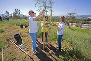A family volunteers to plant a tree at a Tree planting to reforest Stetson Ranch Park in Sylmar after the 2008 devastating wildfire. Organizations such as LA Conservation Corps, Tree People, North East Trees joined Million Trees LA and other volunteers to plant 150 trees to celebrate Earth Day 2009. California, USA.