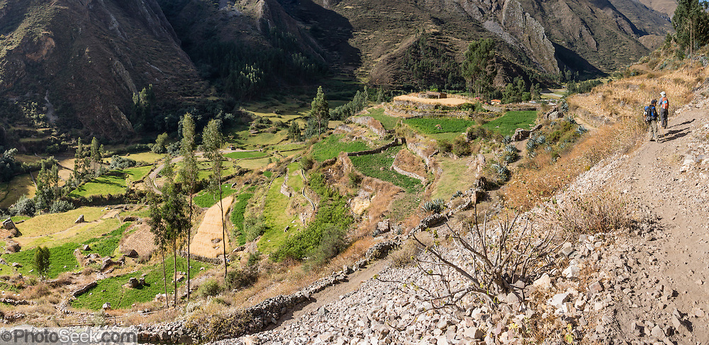 Green crop terraces, Llamac village, in the Cordillera Huayhuash, Andes Mountains, Peru, South America. Day 9 of 9 days trekking around Cordillera Huayhuash. This panorama was stitched from 3 overlapping photos.