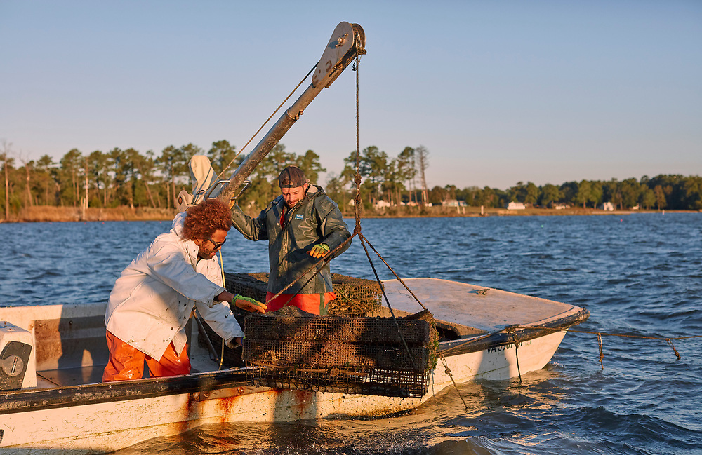 Travis and Ryan Croxton Rappahannock River Oysters
