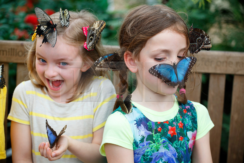 "© licensed to London News Pictures. London, UK 31/03/2014. Children play with butterflies at the Natural History Museum's new exhibition ""Sensational Butterflies"". The exhibition features over 500 tropical butterflies and a chance to watch butterflies emerge from chrysalises trough a hatchery window. Photo credit: Tolga Akmen/LNP"