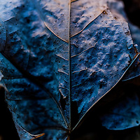 Where: Forest in Ottawa Canada. <br />