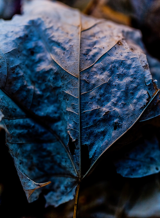 Where: Forest in Ottawa Canada. <br /> A great,macro shot of a leaf. I love the soft colours and textures in this photo.