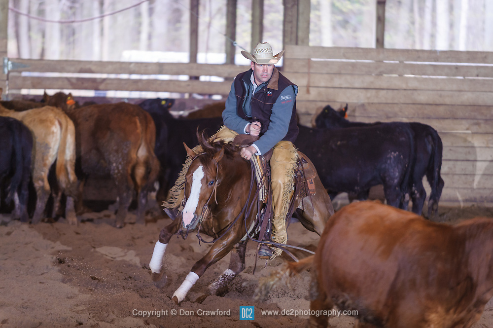 April 30 2017 - Minshall Farm Cutting 2, held at Minshall Farms, Hillsburgh Ontario. The event was put on by the Ontario Cutting Horse Association. Riding in the Non-Pro Class is Eric Van Boekel on Mister Boss Hog owned by the rider.