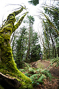 Spencer Paxson in the Chuckanut Mountains of Larrabee State Park near Bellingham, WA for Bike Magazine.