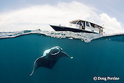manta ray, Manta alfredi (formerly Manta birostris ), feeding on plankton, with dhoni dive tender boat on surface, just outside Hanifaru Bay, Baa Atoll, Maldives ( Indian Ocean )