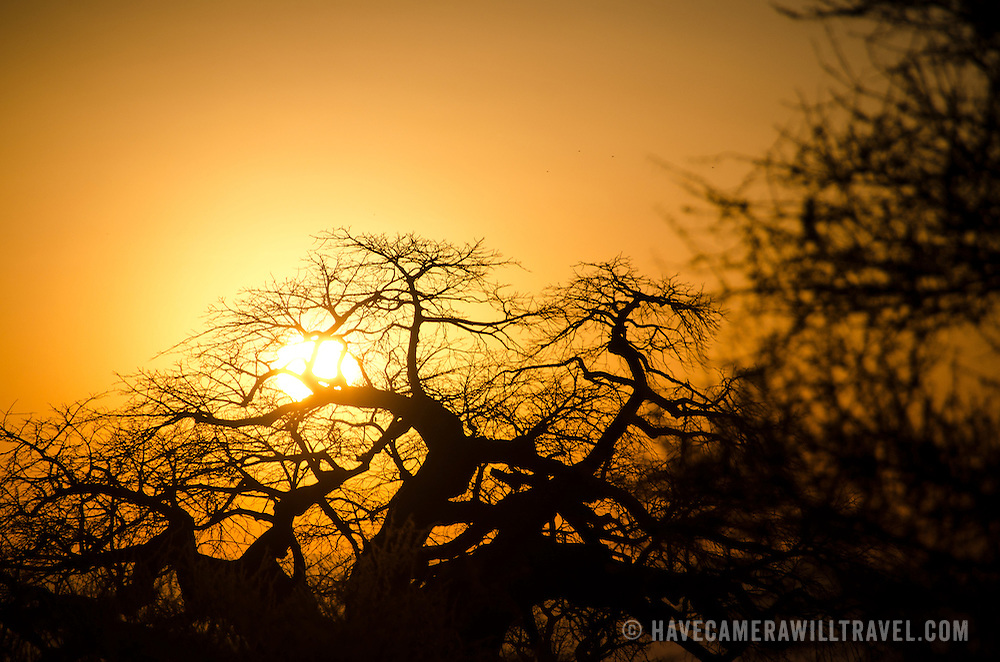 The patterns of a baobab tree against the setting sun at Tarangire National Park in northern Tanzania not far from Ngorongoro Crater and the Serengeti.
