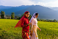 Women walking along a road in the lush Kashmir Valley; Kashmir, Jammu and Kashmir State, India.