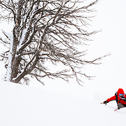 Lynsey Dyer skis untracked powder during a major winter storm in the Tetons.