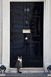 © licensed to London News Pictures. London, UK 08/10/2013. Larry, the Downing Street cat waiting outside Number 10 on Tuesday, 8 October 2013. Photo credit: Tolga Akmen/LNP