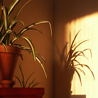 A small plant in sunlight with shadow