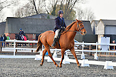 28 - 26th Nov - Dressage