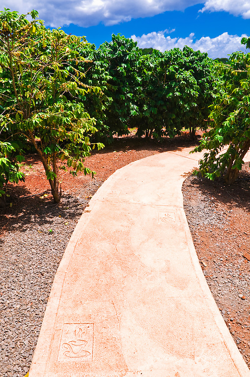 Walkway and coffee trees at the Kauai Coffee Company. Island of Kauai, Hawaii
