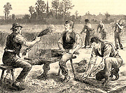 Rippling flax to remove the seeds and remains of flower heads.  In the background the flax plants are being pulled (harvested).  After processing, the long fibres of the stem Flax plant (Linum) were processed to produce linen.  Engraving from 'Great Industries of Great Britain' (London, c1880).