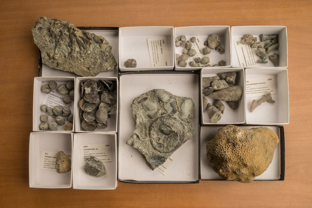 "A collection of fossils of ""invasive"" species at Alycia Stigall's lab in Clippinger Hall. Photo by Ben Siegel"