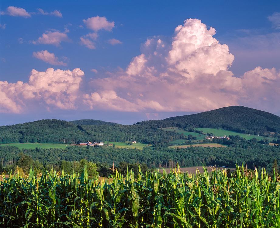 Hillside farms, cornfield & building cumulous clouds, Barnet, VT