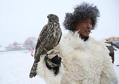 China - Falconry In Jilin - 22 Dec 2016