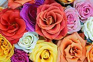 Pattern in basket off roses,<br /> Louisville, Kentucky