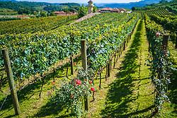 A vinícola Miolo possui 450 hectares plantados no Vale dos Vinhedos, em Bento Gonçalves, RS. Além do belo projeto externo, a empresa montou sua unidade de processamento com o que há de melhor em termos de tecnologia. Foto: Jefferson Bernardes/ Agência Preview