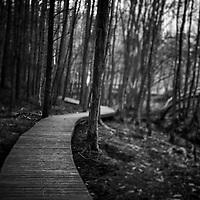 Wooden path snakes through trees, winter, stark branches, dark light