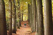 Nederland, Ubbergen, 3-11-2016 Prachtige herfstdagen. Wandelen door een mooie laan in Beek . FOTO: FLIP FRANSSEN