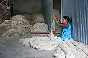 A female factory worker sits, measures and sorts through the newly arrived bundles of raw wool in the store area of the R.C Rug Factory in the Narayanthan area of Kathmandu, Nepal. The company export rugs and carpets to Europe the U.S and Canada, and rely on the GoodWeave certificate of approval to boast excellent quality and fair conditions for its workers, as the carpet factory industry in Nepal is notorious for providing poor working conditions and forcing young children into labour.