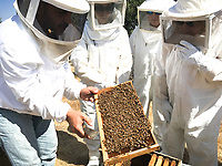 Visiting a local apiary where former soldier turned beekeeper Yousef Sayyah has been tending bees for over 15 years
