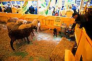 Roma, 29 Settembre 2010.Manifestazione degli  allevatori di pecore al ministero dell'Agricoltura,per il  pericolo di estinzione per la crisi della pastorizia .Rome, 29 September 2010.Demonstration of sheep farmer to the Agriculture Ministry, for the danger of extinction because of the crisis of pastoralism