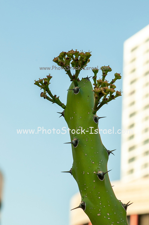 A cactus at a Cactus and succulent garden Photographed in Tel Aviv, Israel in May
