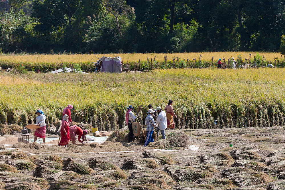 Workers in the fields in Nepal. 66% of the Nepali population work in agriculture and it provides approximately 33% of GDP. Nepal remains one of the poorest countries in Asia with a per capita GDP of $562.