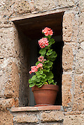 A flower pot and flowers sit in a window in a small Italian village in Tuscany.