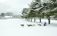 85th annual Laconia World Championship Sled Dog Derby. ©2014 Karen Bobotas Photographer