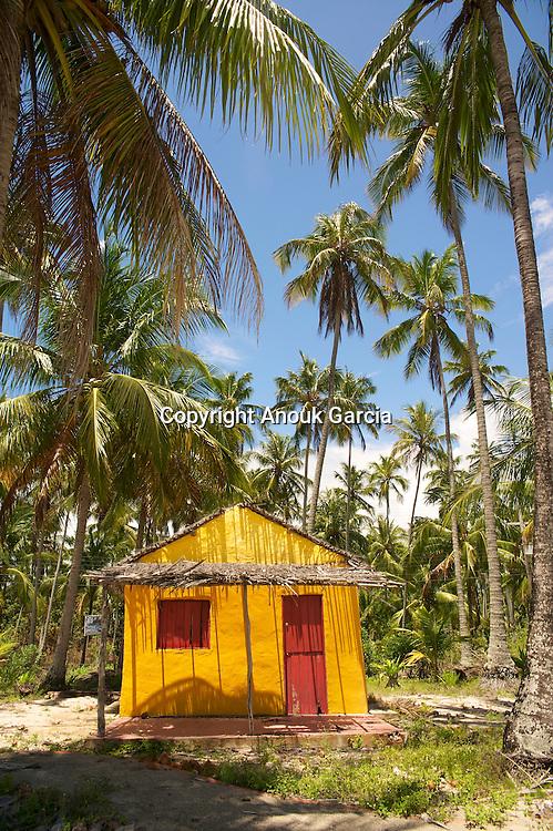 Les maisons en bois colorées des pêcheurs ponctue les immenses plantations de cocotiers///The houses out of wooden coloured of the fishermen punctuates the immense plantations of coconuts