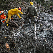 Rescue workers use chainsaws and other tools to dig through a tangle of trees and mud marked as having a possible victim of the Oso mudslide along State Route 530 near Darrington, Wash. Rescue and recovery workers slogged through thick mud and debris as rain poured down on the area one week after the devastating disaster. Photographed on Saturday, March 29, 2014. (Joshua Trujillo, seattlepi.com)