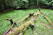 Lichtung im Wald, Zwieseler Waldhaus, Bayerischer Wald, Bayern, Deutschland | clearing in forest, Zwieseler Waldhaus, Bavarian Forest, Bavaria, Germany